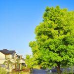 大和ハウスと住友林業を比較!注文住宅を建てるなら知っておきたい違いとは?